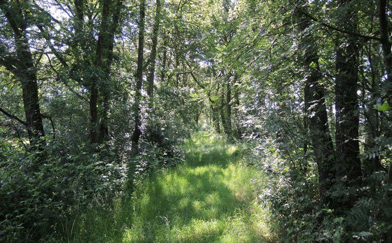 voetzoekers – Beekdal Hondstong route 7