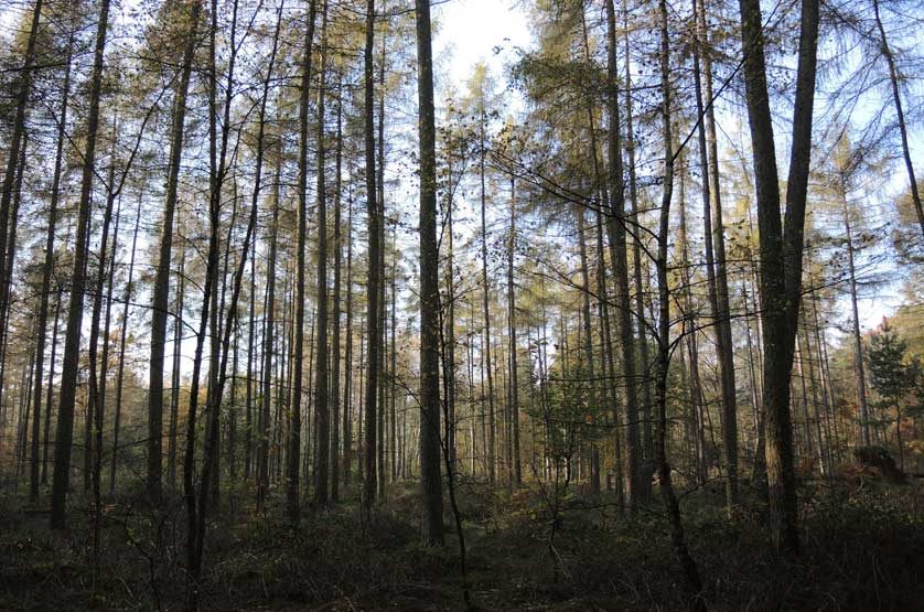 voetzoekers-boswachterij-gees-groene-route-1