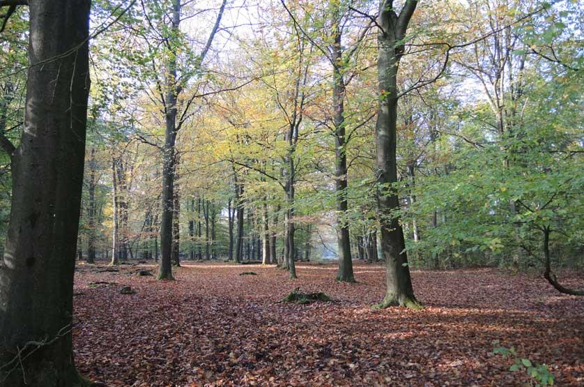 voetzoekers-boswachterij-gees-groene-route-2