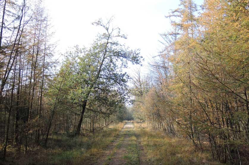 voetzoekers-boswachterij-gees-groene-route-3