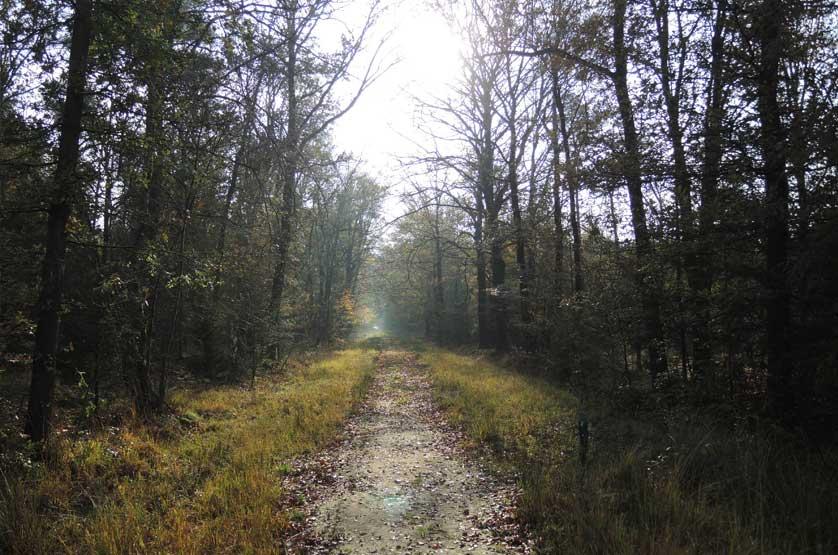 voetzoekers-boswachterij-gees-groene-route-4