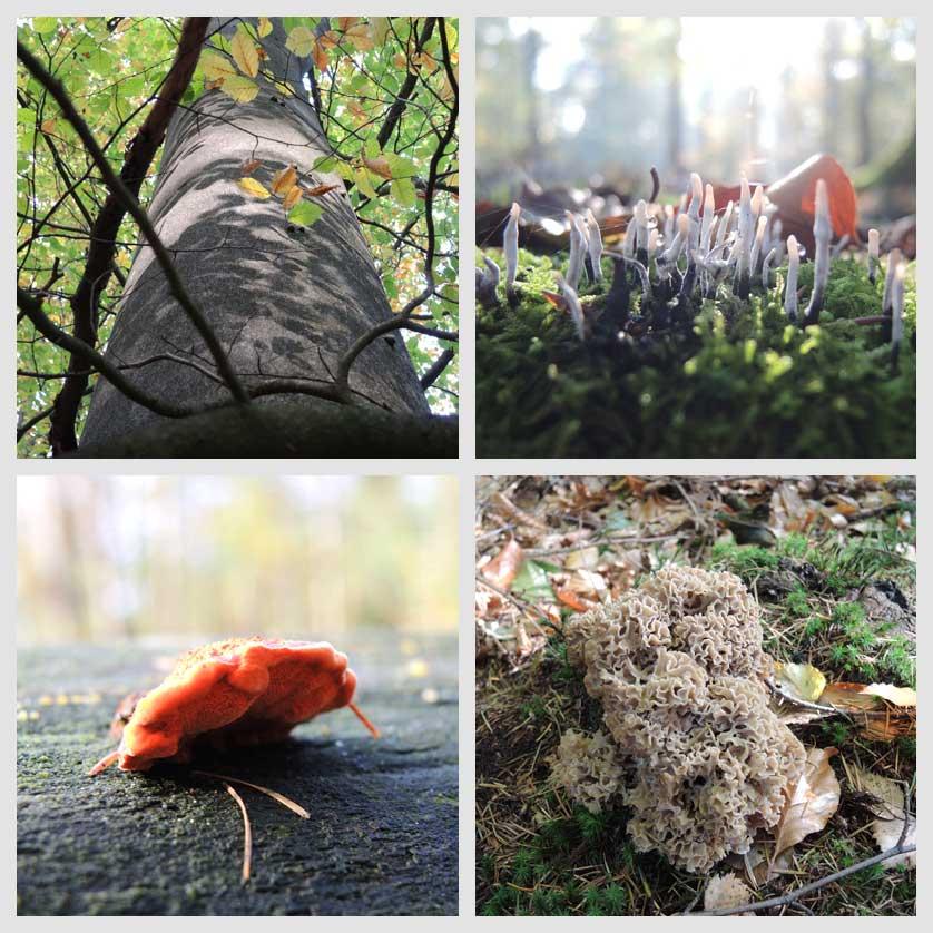 voetzoekers-boswachterij-gees-groene-route-impressie