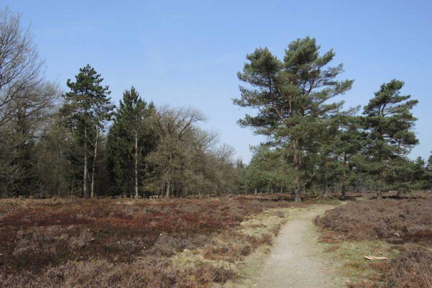 voetzoekers Boswachterij Ruinen – Groene route 10