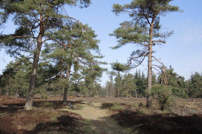 voetzoekers Boswachterij Ruinen – Groene route 11