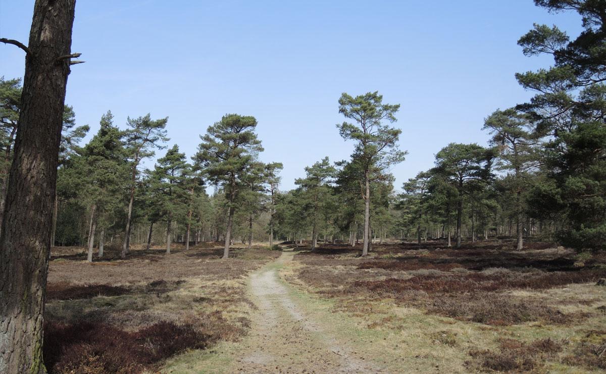 voetzoekers Boswachterij Ruinen – Groene route 12