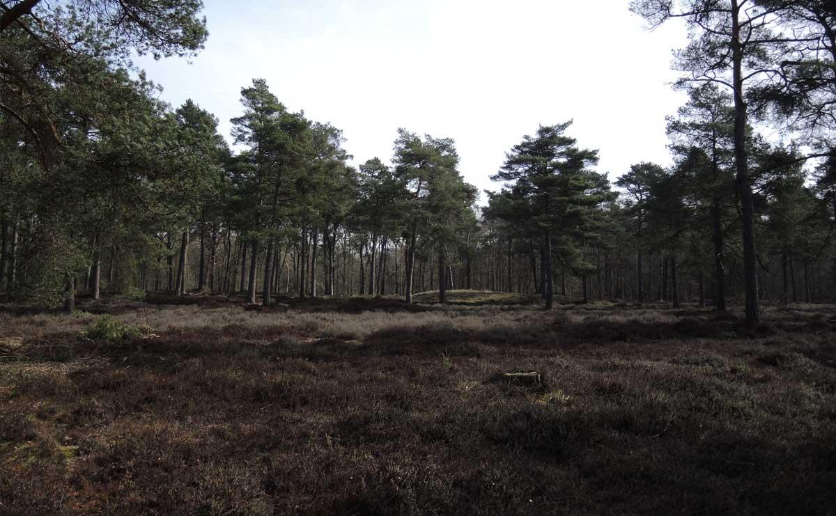 voetzoekers Boswachterij Ruinen – Groene route 13