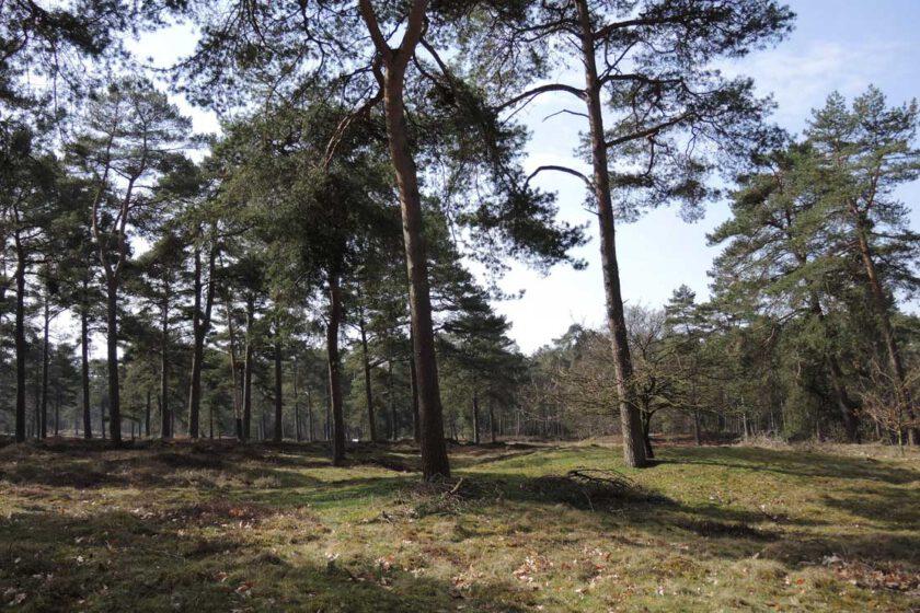 voetzoekers Boswachterij Ruinen – Groene route 2