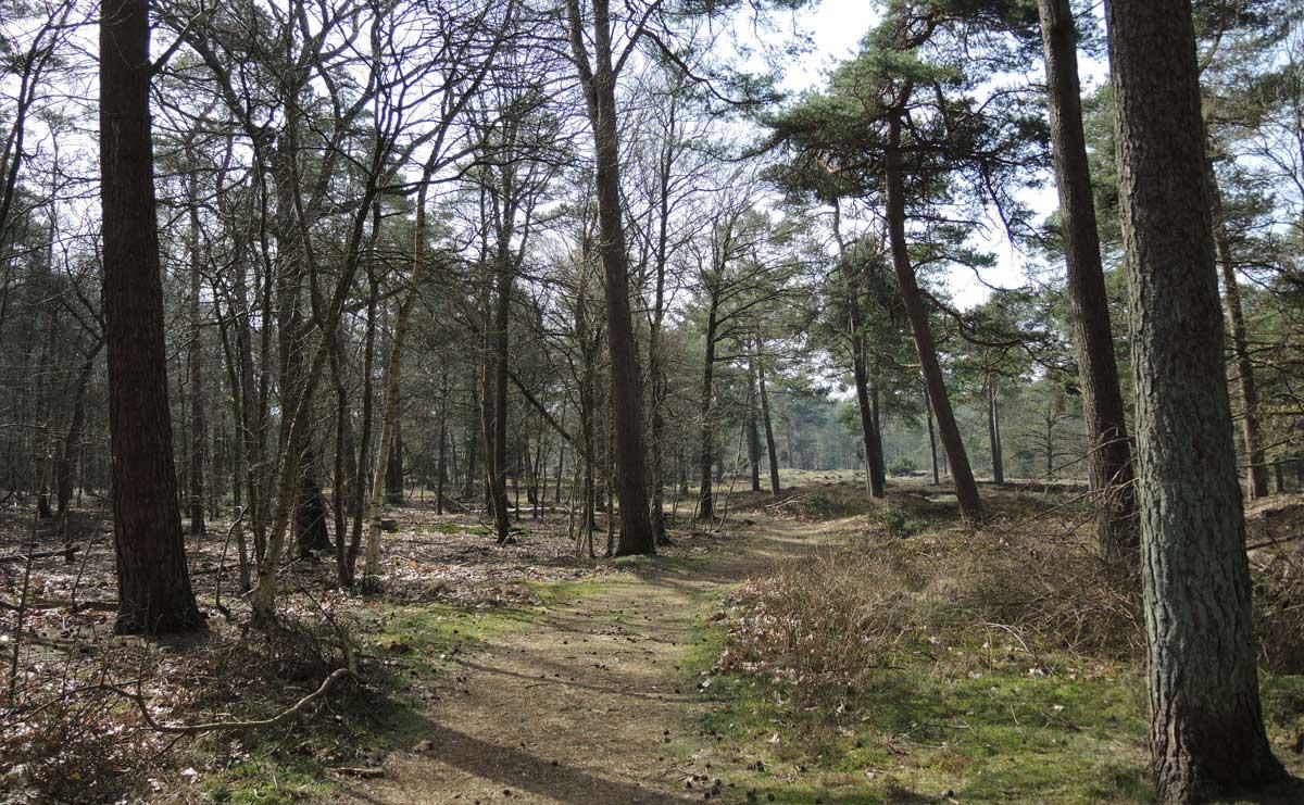 voetzoekers Boswachterij Ruinen – Groene route 3