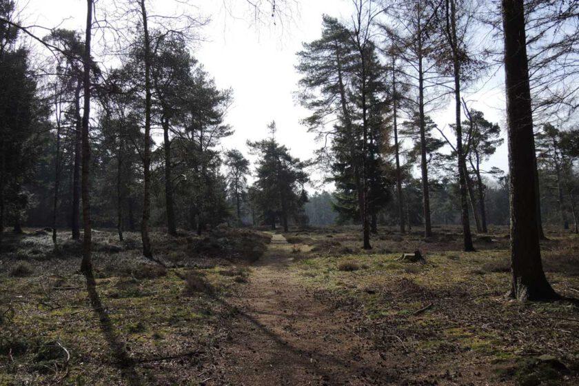 voetzoekers Boswachterij Ruinen – Groene route 4