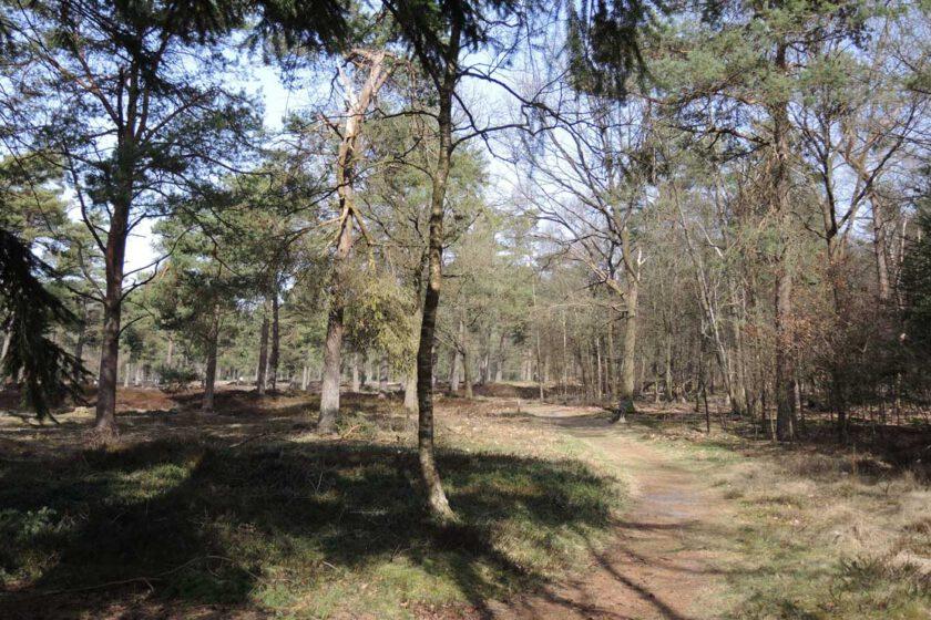 voetzoekers Boswachterij Ruinen – Groene route 5