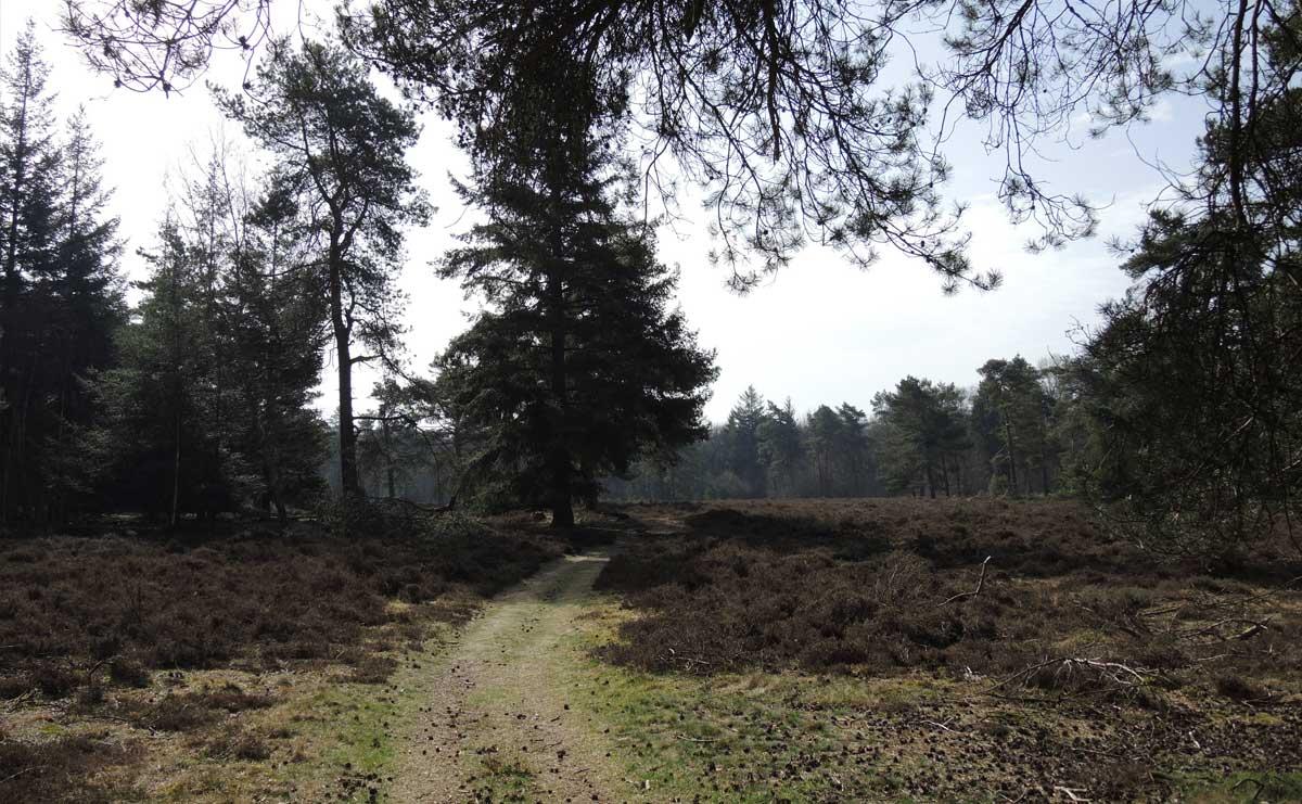 voetzoekers Boswachterij Ruinen – Groene route 6