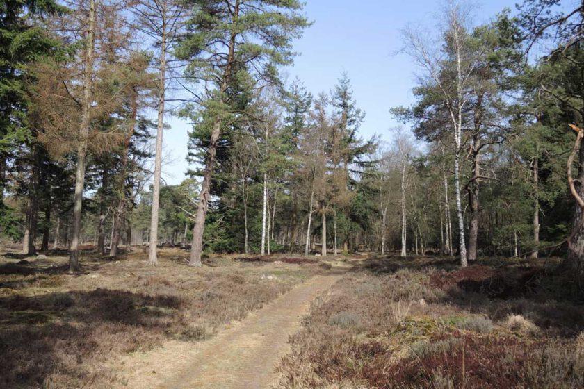 voetzoekers Boswachterij Ruinen – Groene route 7