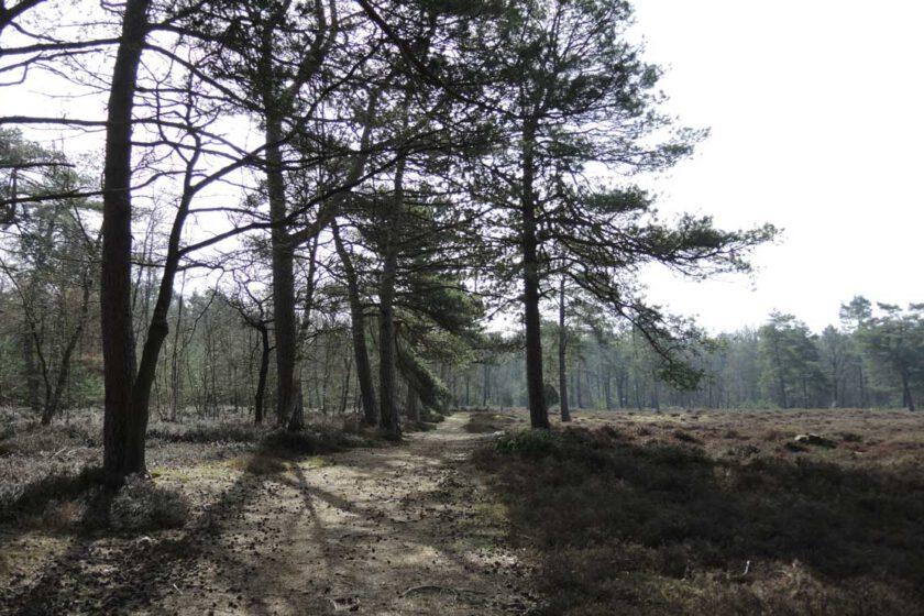 voetzoekers Boswachterij Ruinen – Groene route 8