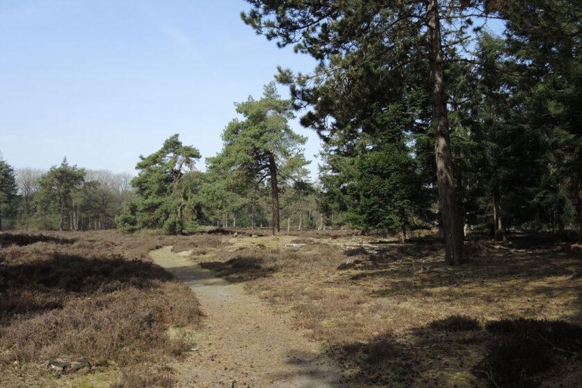 voetzoekers Boswachterij Ruinen – Groene route 9