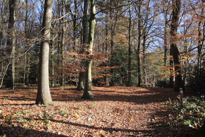 voetzoekers – Boswandeling Spier 1