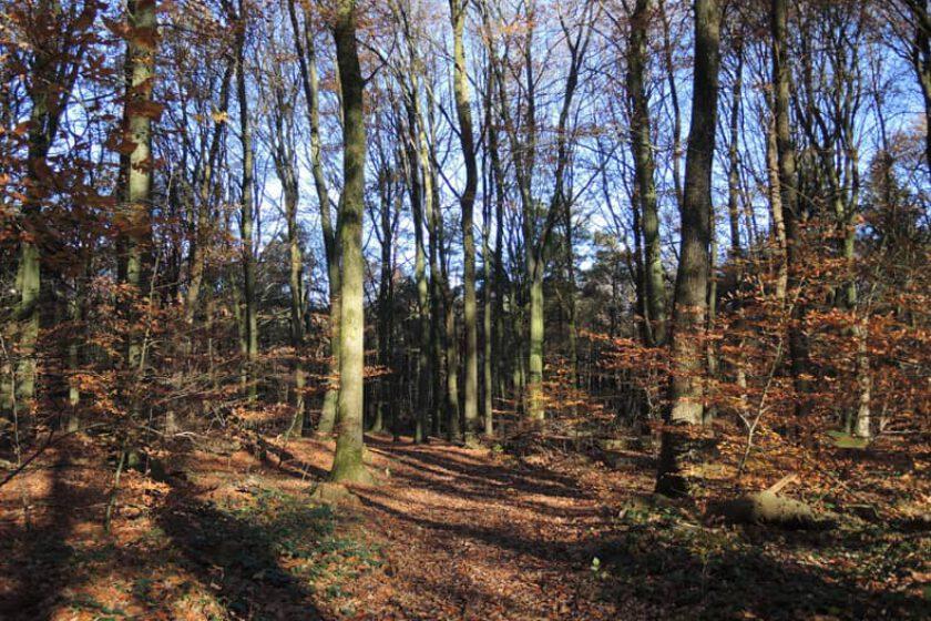 voetzoekers – Boswandeling Spier 2