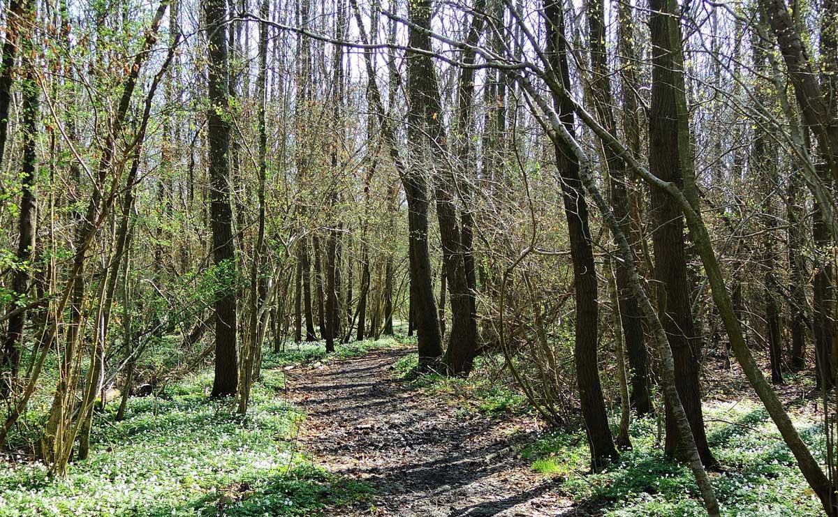 voetzoekers – De Kleibosch 5