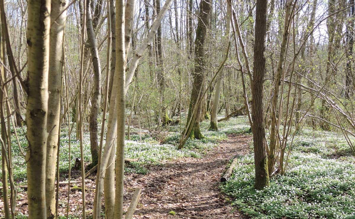 voetzoekers – De Kleibosch 6