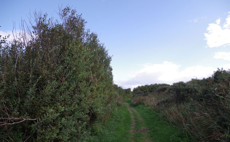 voetzoekers – De Muy – Texel – 2