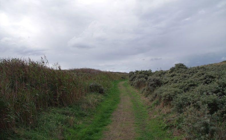 voetzoekers – De Muy – Texel – 7
