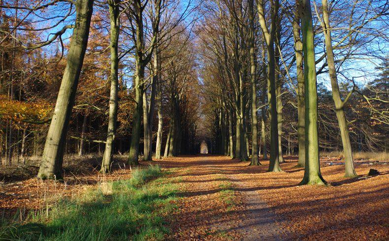 voetzoekers – Esmeerroute 15