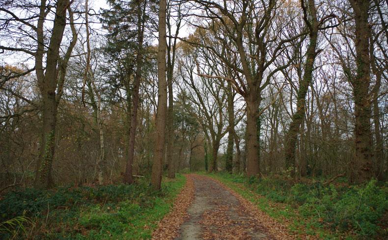 voetzoekers – Familiepad Drentsche Aa – Route 5