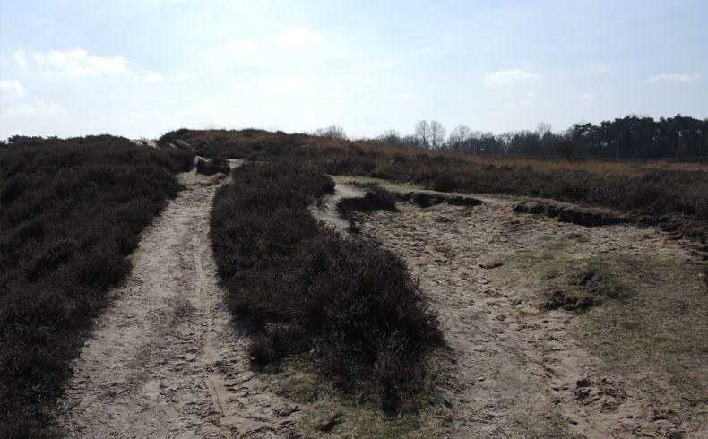 voetzoekers – Gasterse Duinen – Route 6