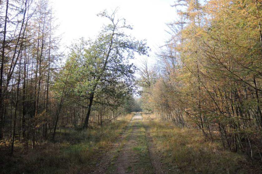 voetzoekers Gees groen 7