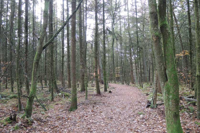 voetzoekers Gees rode route 5