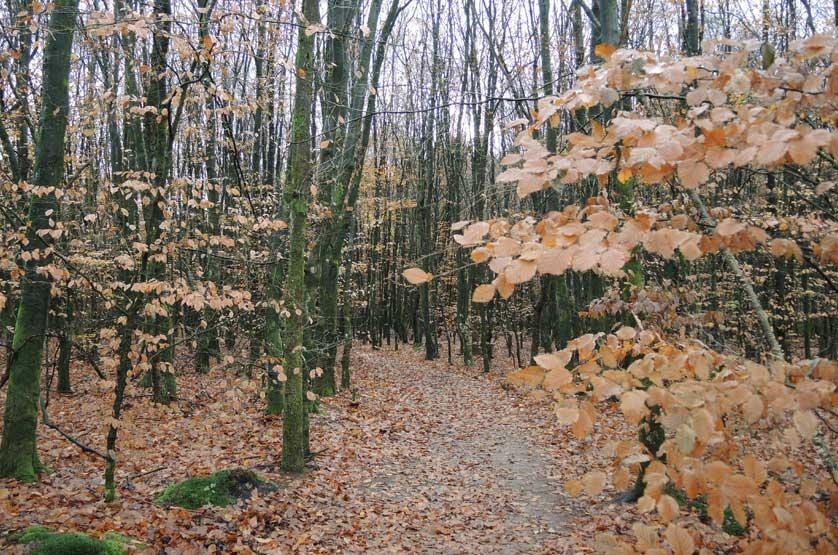 voetzoekers Gees rode route 8