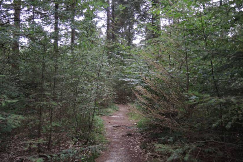 voetzoekers – Krombeukenlaanroute – 5