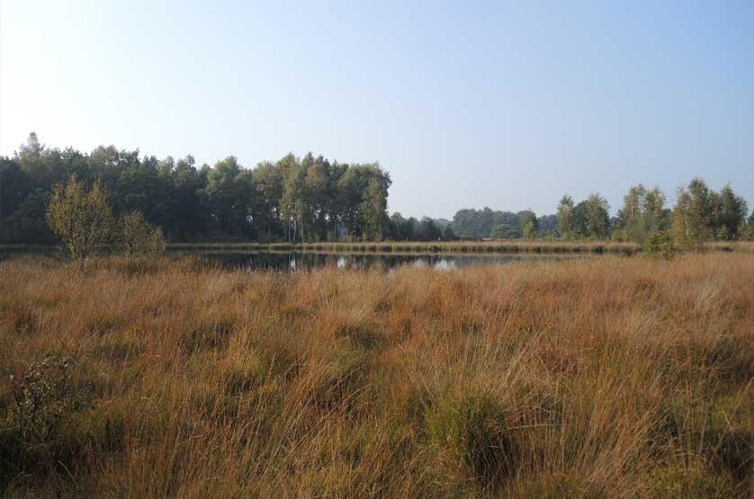 voetzoekers-landgoed-vossenberg-een-van-de-vennen-in-het-gebied