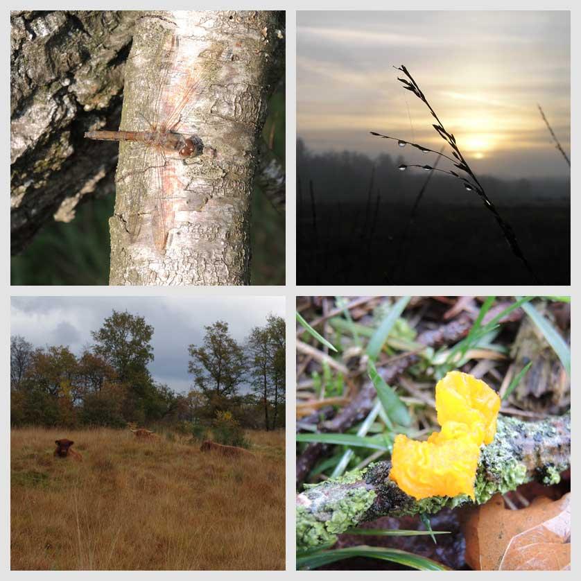 voetzoekers-landgoed-vossenberg-impressie