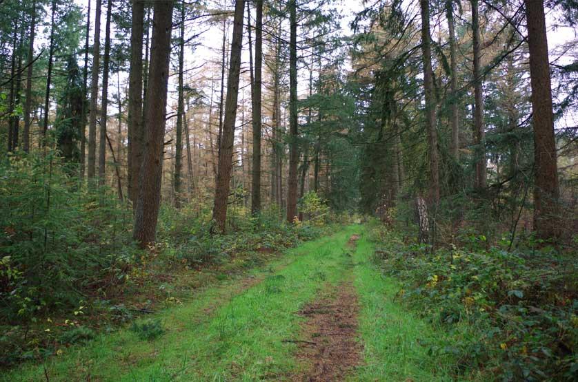 voetzoekers-landgoed-vossenberg-pad-terug-naar-het-kanaal