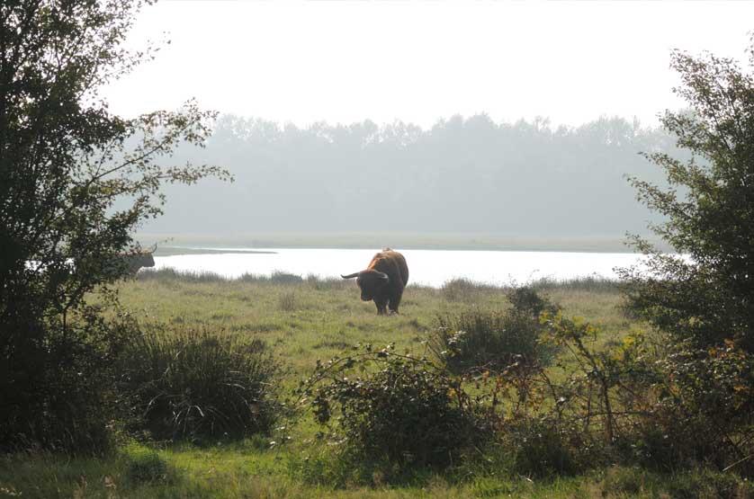 voetzoekers-landgoed-vossenberg-schotse-hooglanders