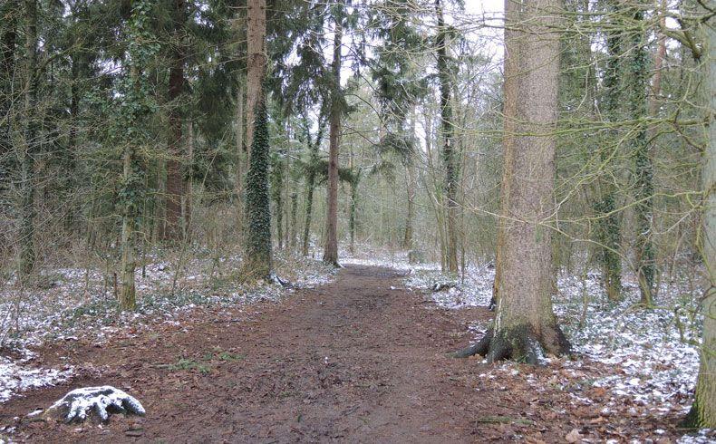 voetzoekers – Noordbargerbos – Noord – 1 stronken