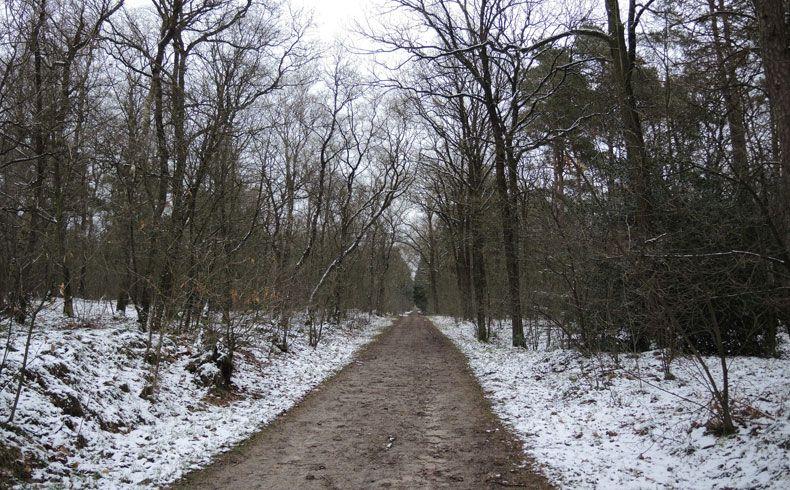 voetzoekers – Noordbargerbos-Noord – 10 – Rechttoe