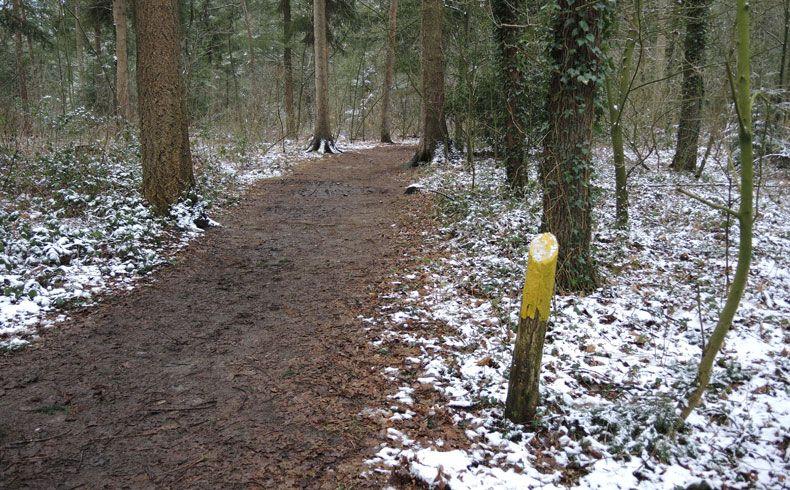 voetzoekers – Noordbargerbos-Noord – 2 markering