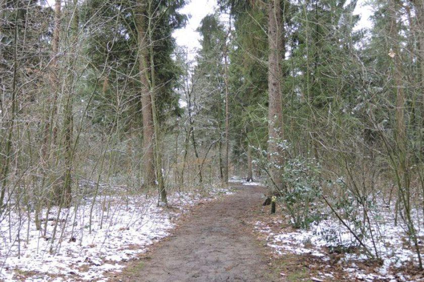 voetzoekers – Noordbargerbos-Noord – 3 Door het bos
