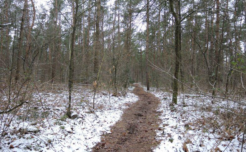 voetzoekers – Noordbargerbos-Noord – 4 Besneeuwd bos