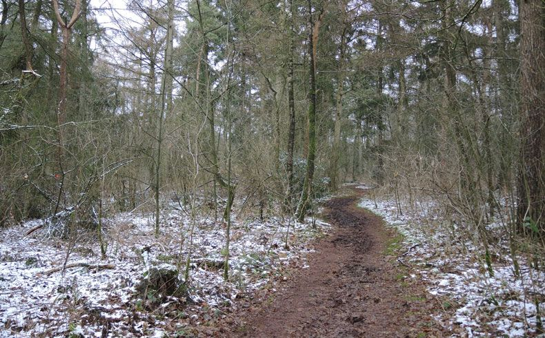 voetzoekers – Noordbargerbos-Noord – 5 Kronkelpad