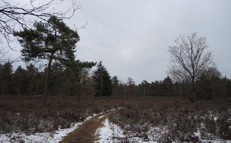 voetzoekers – Noordbargerbos-Noord – 6 Heidegebied