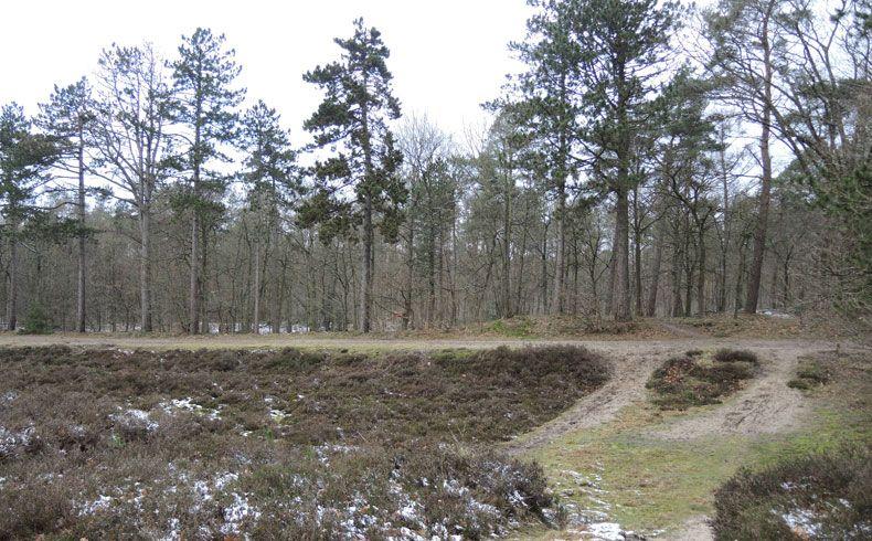 voetzoekers – Noordbargerbos-Noord – 7 Heide