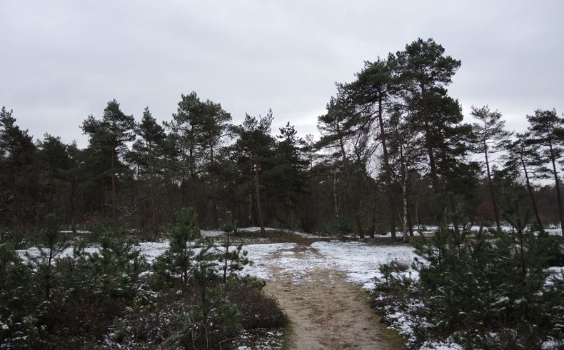 voetzoekers – Noordbargerbos-Noord – 8 Naaldbomen