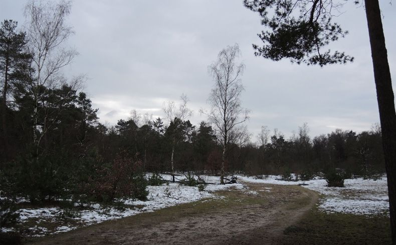 voetzoekers – Noordbargerbos-Noord – 9 Zandpad