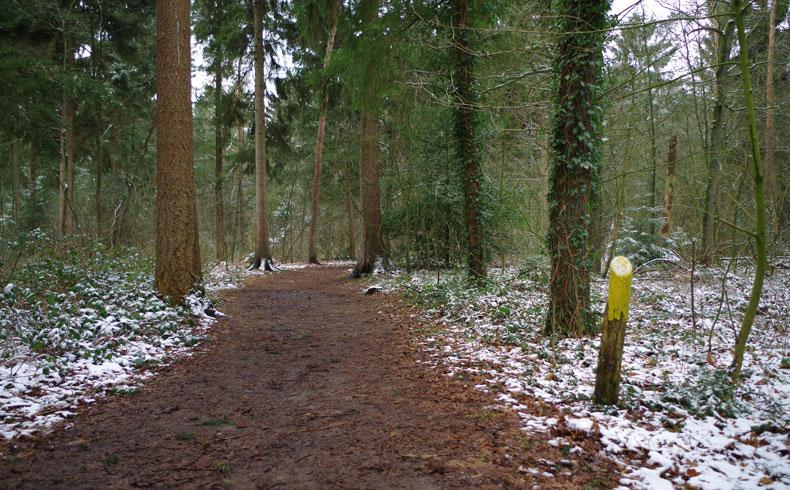 voetzoekers-noordbargerbos-noord-gele-markering