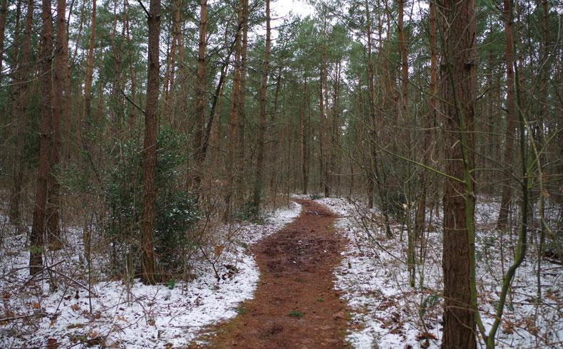voetzoekers-noordbargerbos-noord-naaldbomen