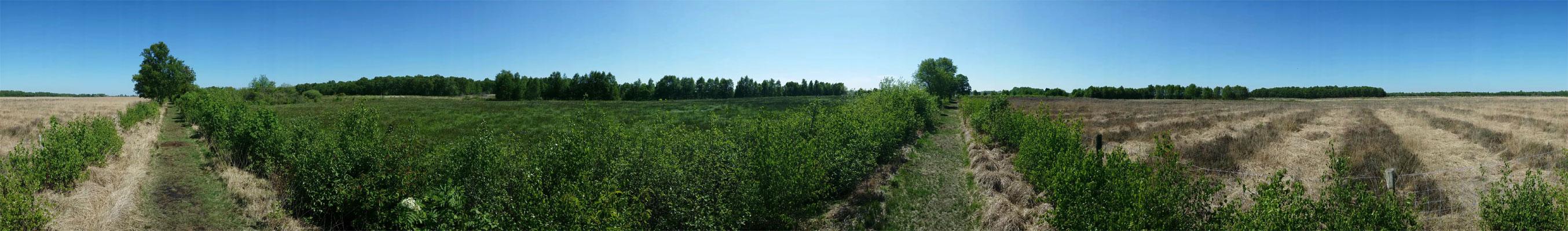 voetzoekers-panorama-bargerveen-schoonebekerveld