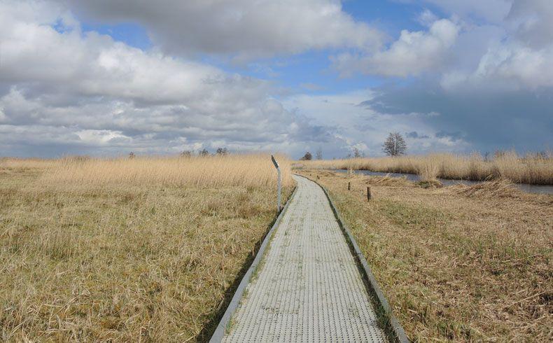 voetzoekers – Vlonderpad De Wieden 4