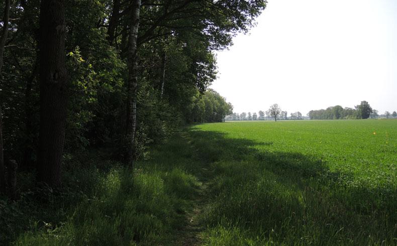 voetzoekers – Westerhaar 15